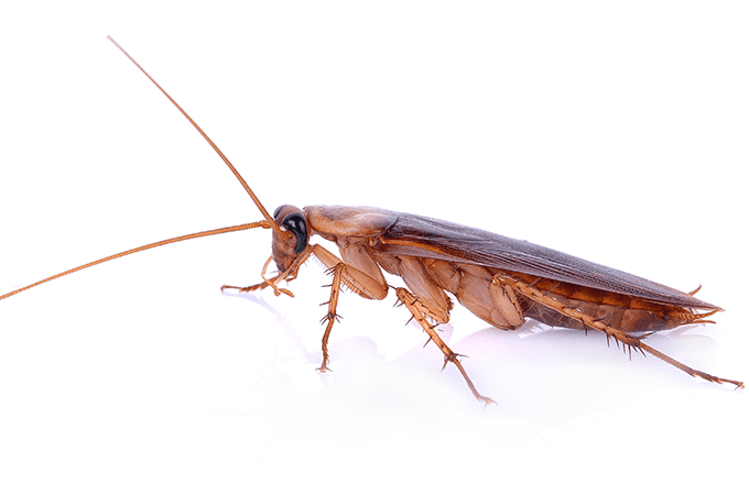 photo of florida roach