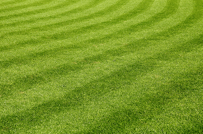 photo of green lawn in port st lucie