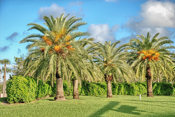 commercial lawn and trees treated for bugs and white flies